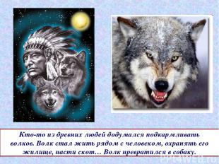 Кто-то из древних людей додумался подкармливать волков. Волк стал жить рядом с ч