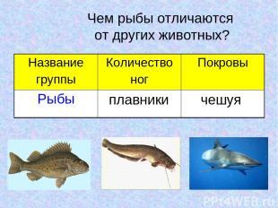 Чем рыбы отличаются от других животных? плавники чешуя Название группы Количеств