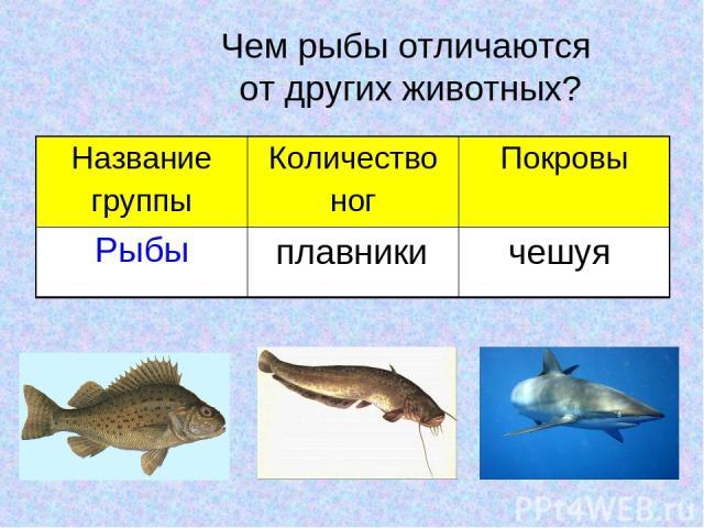 Чем рыбы отличаются от других животных? плавники чешуя Название группы Количество ног Покровы Рыбы