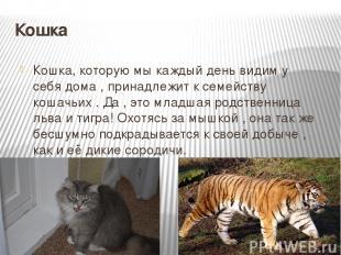 Кошка Кошка, которую мы каждый день видим у себя дома , принадлежит к семейству