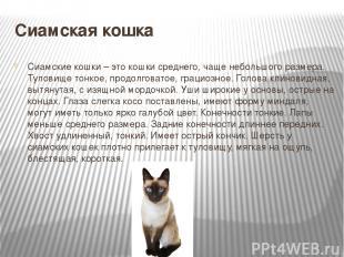 Сиамская кошка Сиамские кошки – это кошки среднего, чаще небольшого размера. Тул