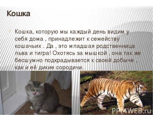 Кошка Кошка, которую мы каждый день видим у себя дома , принадлежит к семейству кошачьих . Да , это младшая родственница льва и тигра! Охотясь за мышкой , она так же бесшумно подкрадывается к своей добыче , как и её дикие сородичи.