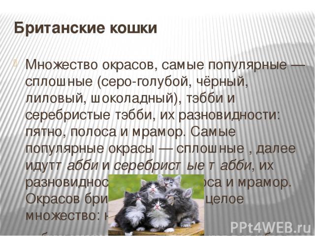 Британские кошки Множество окрасов, самые популярные — сплошные (серо-голубой, чёрный, лиловый, шоколадный), тэбби и серебристые тэбби, их разновидности: пятно, полоса и мрамор. Самые популярные окрасы— сплошные , далее идуттаббиисеребристые табб…