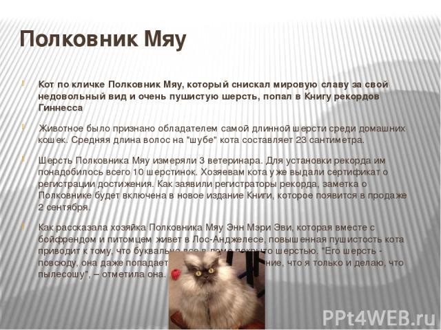 Полковник Мяу Кот по кличке Полковник Мяу, который снискал мировую славу за свой недовольный вид и очень пушистую шерсть, попал в Книгу рекордов Гиннесса Животное было признано обладателем самой длинной шерсти среди домашних кошек. Средняя длина вол…