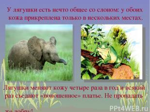 У лягушки есть нечто общее со слоном: у обоих кожа прикреплена только в нескольк