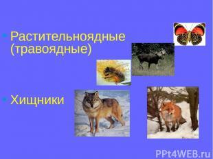 Растительноядные (травоядные) Хищники