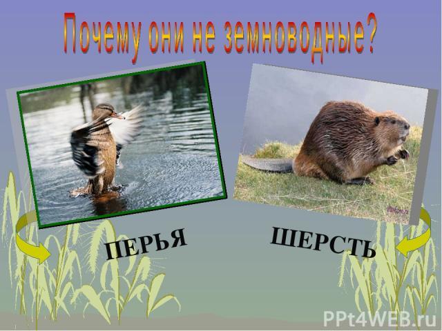 ПЕРЬЯ ШЕРСТЬ