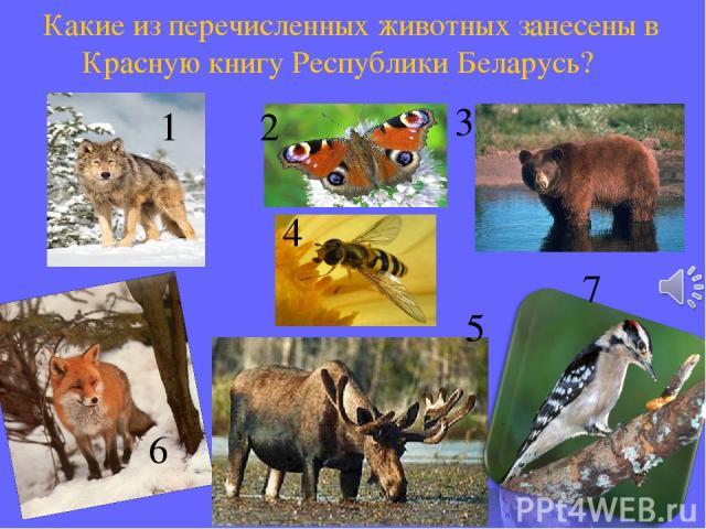 1 2 3 5 4 6 7 Какие из перечисленных животных занесены в Красную книгу Республики Беларусь?