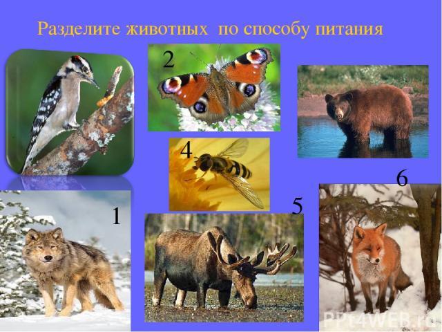 2 5 1 4 6 Разделите животных по способу питания