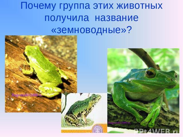 Почему группа этих животных получила название «земноводные»?
