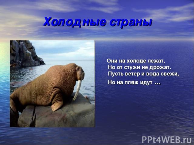 Холодные страны Они на холоде лежат, Но от стужи не дрожат. Пусть ветер и вода свежи, Но на пляж идут ...