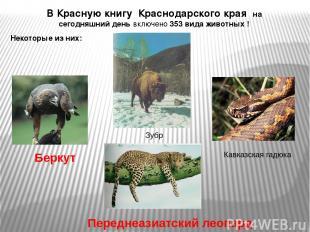 В Красную книгу Краснодарского края на сегодняшний день включено 353 вида животн