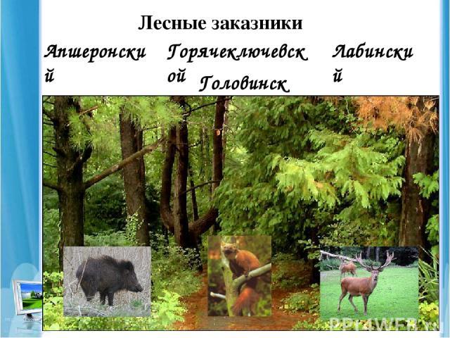 Лесные заказники Апшеронский Горячеключевской Лабинский Головинский