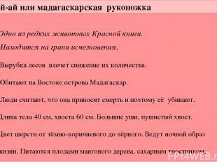 Ай-ай или мадагаскарская руконожка Одно из редких животных Красной книги. Находи