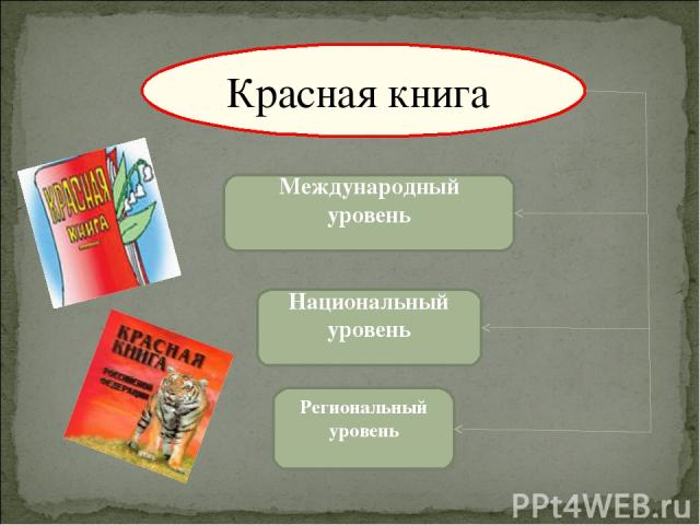Международный уровень Национальный уровень Региональный уровень Красная книга