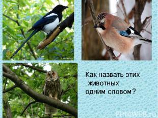 Как назвать этих животных одним словом?