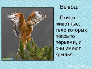 Вывод: Птицы – животные, тело которых покрыто перьями, и они имеют крылья.