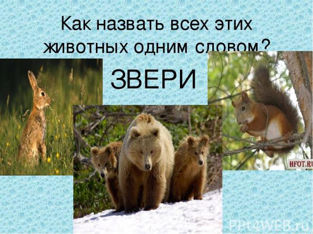 Как назвать всех этих животных одним словом? ЗВЕРИ
