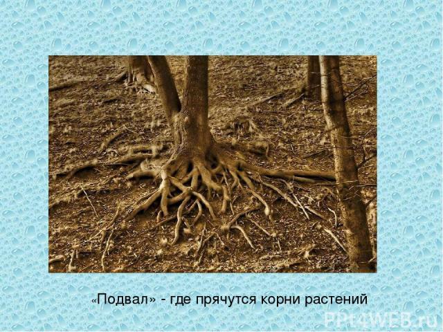 «Подвал» - где прячутся корни растений