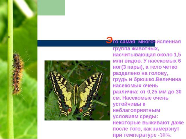 Это самая многочисленная группа животных, насчитывающая около 1,5 млн видов. У насекомых 6 ног(3 пары), а тело четко разделено на голову, грудь и брюшко.Величина насекомых очень различна: от 0,25 мм до 30 см. Насекомые очень устойчивы к неблагоприят…