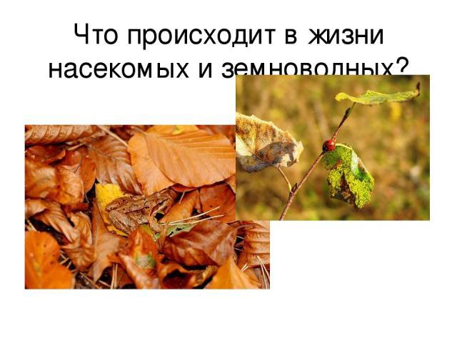 Что происходит в жизни насекомых и земноводных?