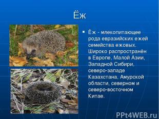 Ёж Ёж - млекопитающее рода евразийских ежей семейства ежовых. Широко распростран