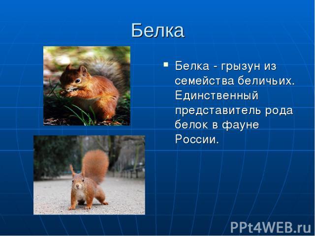 Белка Белка - грызун из семейства беличьих. Единственный представитель рода белок в фауне России.
