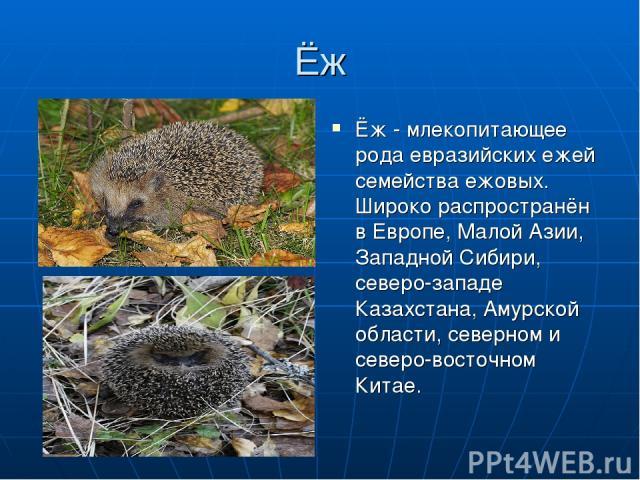Ёж Ёж - млекопитающее рода евразийских ежей семейства ежовых. Широко распространён в Европе, Малой Азии, Западной Сибири, северо-западе Казахстана, Амурской области, северном и северо-восточном Китае.