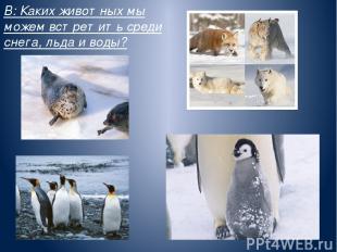 В: Каких животных мы можем встретить среди снега, льда и воды?