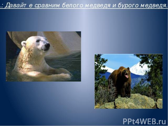 В.: Давайте сравним белого медведя и бурого медведя.
