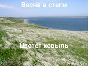 Весна в степи Цветёт ковыль