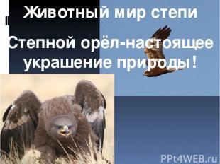 Животный мир степи Степной орёл-настоящее украшение природы!