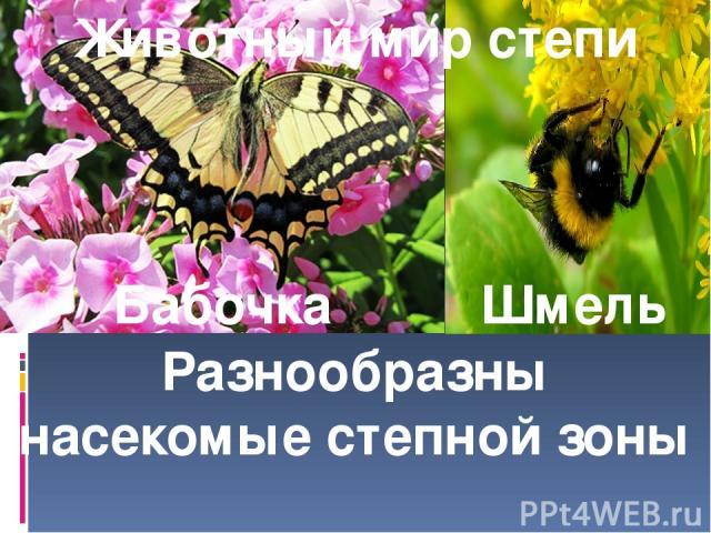 Животный мир степи Бабочка Шмель Разнообразны насекомые степной зоны