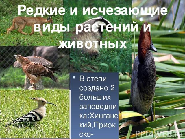 В степи создано 2 больших заповедника:Хинганский,Приокско-террасный.В степи все животные и растения охраняются. Редкие и исчезающие виды растений и животных