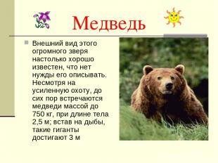 Медведь Внешний вид этого огромного зверя настолько хорошо известен, что нет нуж
