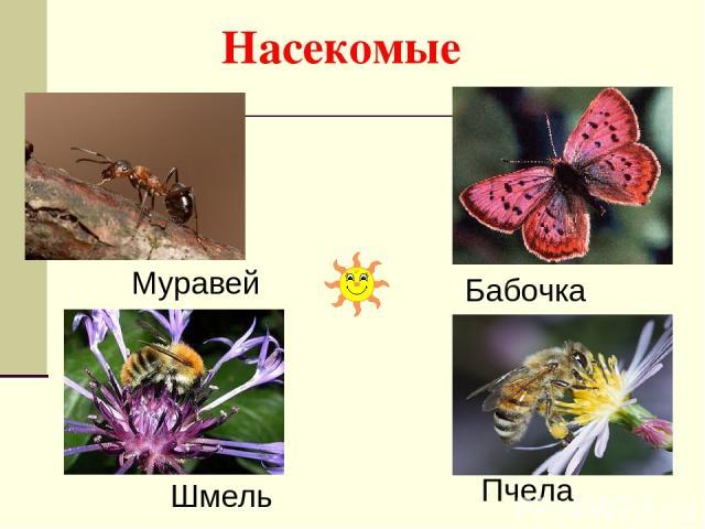 Насекомые Пчела Шмель Бабочка Муравей