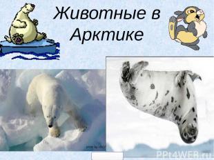 Животные в Арктике 5klass.net