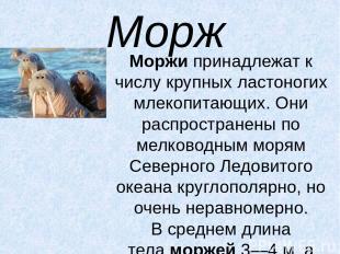 Морж Моржипринадлежат к числу крупных ластоногих млекопитающих. Они распростран