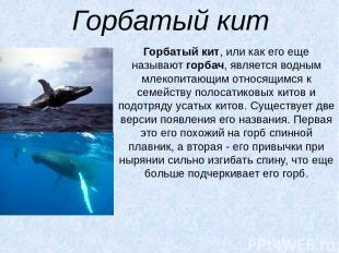 Горбатый кит Горбатый кит, или как его еще называютгорбач, является водным млек