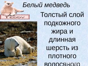 Белый медведь Толстый слой подкожного жира и длинная шерсть из плотного волосяно