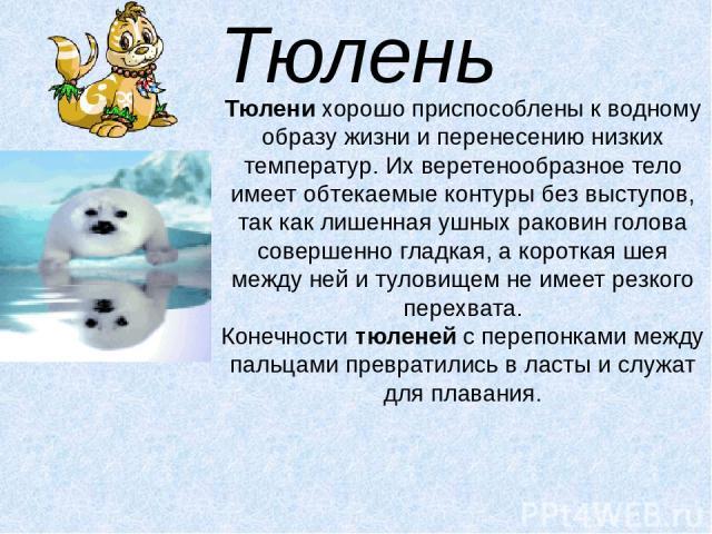 Тюлень Тюленихорошо приспособлены к водному образу жизни и перенесению низких температур. Их веретенообразное тело имеет обтекаемые контуры без выступов, так как лишенная ушных раковин голова совершенно гладкая, а короткая шея между ней и туловищем…