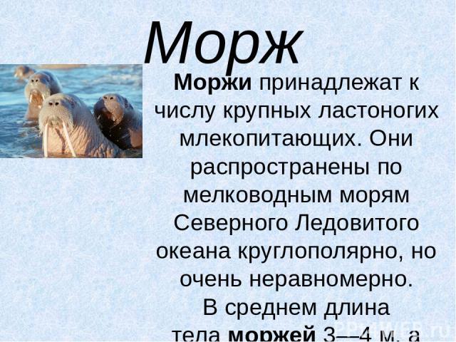 Морж Моржипринадлежат к числу крупных ластоногих млекопитающих. Они распространены по мелководным морям Северного Ледовитого океана круглополярно, но очень неравномерно. В среднем длина теламоржей3—4 м, а масса — около 1,5 т. Самой характерной ос…