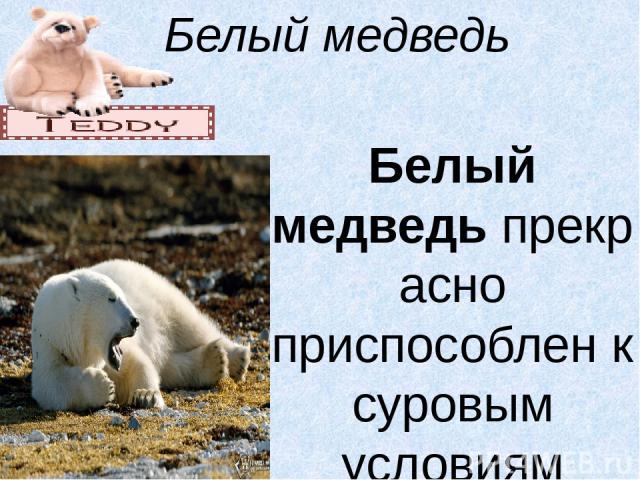 Белый медведь  Белый медведьпрекрасно приспособлен к суровым условиям Арктики и полуводному образу жизни. Короткие уши у него опушены и утопают в шерсти, что уменьшает теплоотдачу. Его стройное туловище, удлиненная шея и небольшая вытянутая голова…
