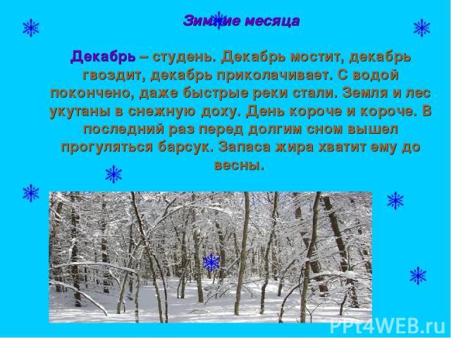 Зимние месяца Декабрь – студень. Декабрь мостит, декабрь гвоздит, декабрь приколачивает. С водой покончено, даже быстрые реки стали. Земля и лес укутаны в снежную доху. День короче и короче. В последний раз перед долгим сном вышел прогуляться барсук…
