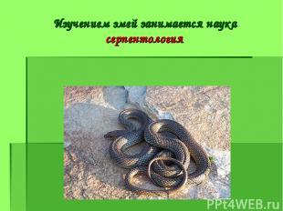 Изучением змей занимается наука серпентология