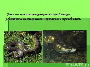 Змеи — это пресмыкающиеся, они близкие родственники ящерицам, черепахам и крокод