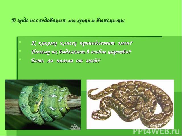В ходе исследования мы хотим выяснить: К какому классу принадлежат змеи? Почему их выделяют в особое царство? Есть ли польза от змей?