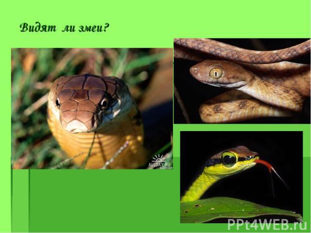 Видят ли змеи?