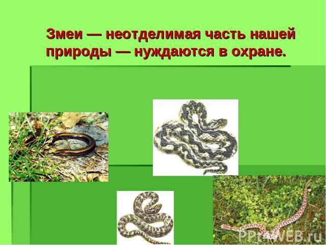 Змеи — неотделимая часть нашей природы — нуждаются в охране.