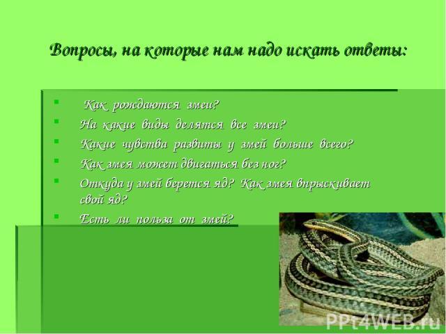 Вопросы, на которые нам надо искать ответы: Как рождаются змеи? На какие виды делятся все змеи? Какие чувства развиты у змей больше всего? Как змея может двигаться без ног? Откуда у змей берется яд? Как змея впрыскивает свой яд? Есть ли польза от змей?